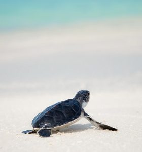 Save the sea turtle from extinction